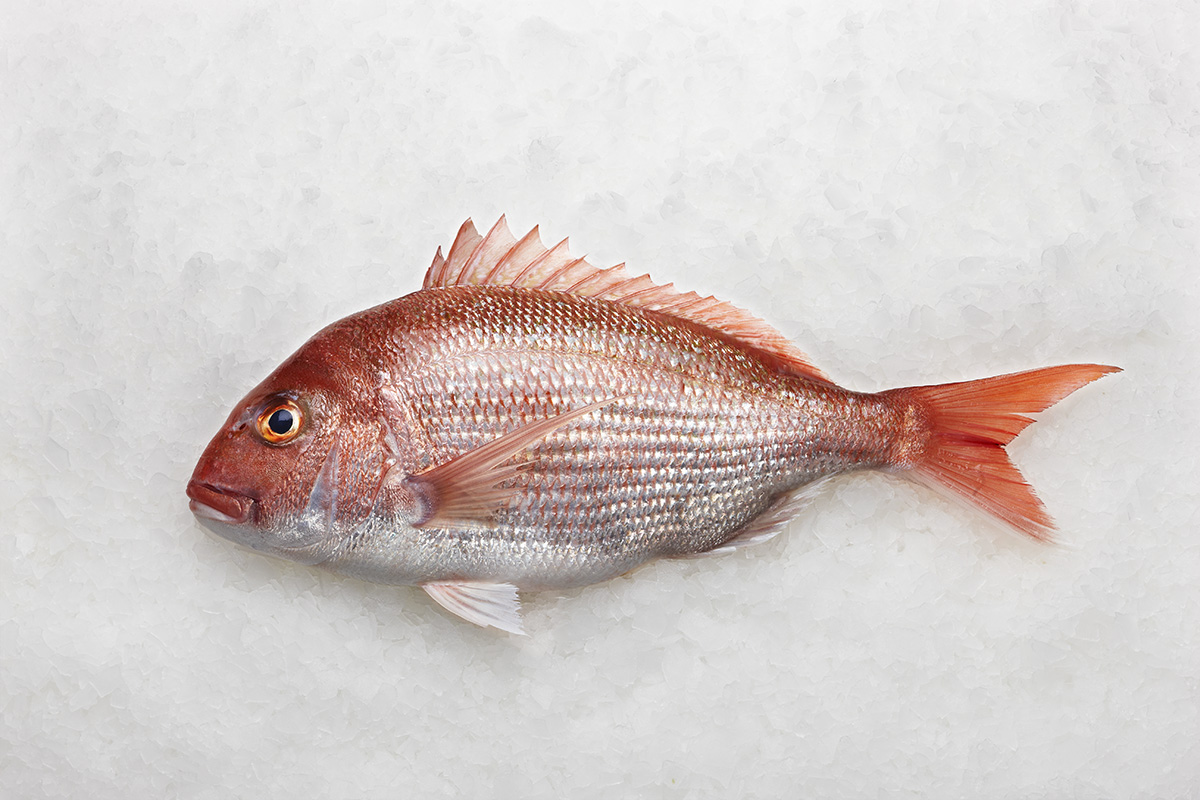 Lee fish usa new zealand snapper for Red snapper fishing
